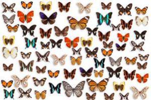 butterfly effeck
