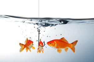 złote rybki na haczyku